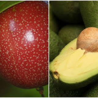Avocado and Passionfruit Sorbet