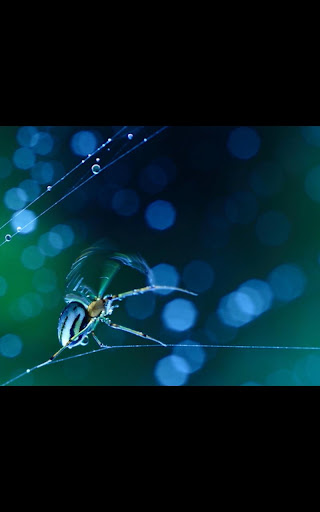 My Photo Spider Galaxy LWP