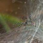 Lawn spider