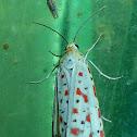 Salt and Pepper Moth