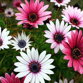 Flowers by Phil Le Cren - Flowers Flower Gardens ( flowers, flower,  )
