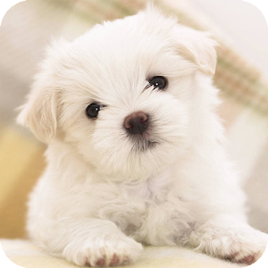 App Icon Cute Puppy Dog Wallpapers HD