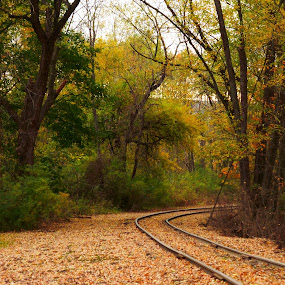 Railroad in Pa. by Annette Long-Soller - Transportation Railway Tracks ( curve, pa., autumn leaves, railway, trees )