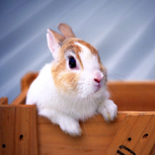 Rabbit HD LWP Lite