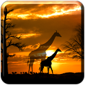 African Scene FULL icon