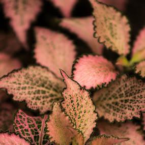 pink green black by Dale Versteegen - Nature Up Close Leaves & Grasses ( contrast, leaves,  )