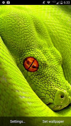 Green Snake Live Wallpaper
