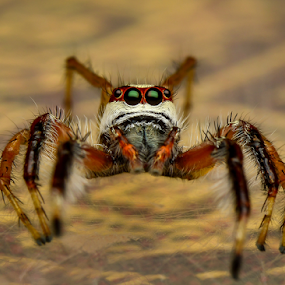 I'm going to jump! by Dave Lerio - Animals Insects & Spiders