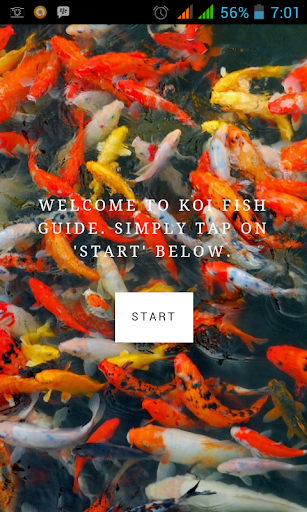 Koi Fish Guide