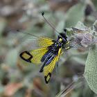 Owlfly