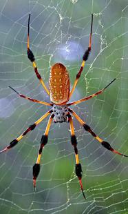 PUZZI拼圖蜘蛛高清