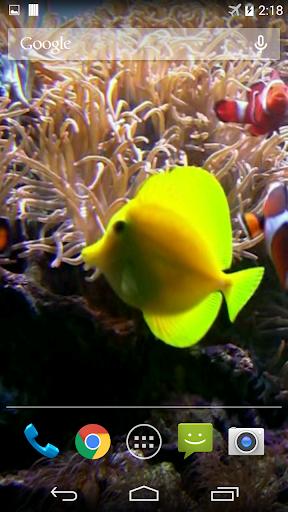 Clownfish Aquarium Wallpaper