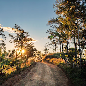 el camino by Charles Saunders - Novices Only Landscapes ( nature, trees, dominican republic, road, dirt, relax, tranquil, relaxing, tranquility )