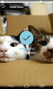Muzei Random Kitties - screenshot thumbnail