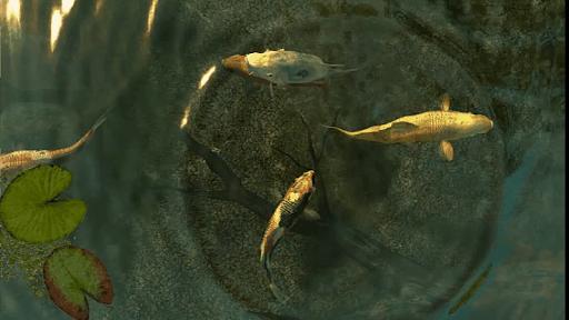 3D Koi Pond
