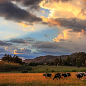 Coming Home by Hans-Erik Arp - Landscapes Prairies, Meadows & Fields ( clouds, sky, african, sunset, south africa, magaliesburg, stormsignal, dusk,  )