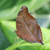 Autumn Leaf  - Butterfly