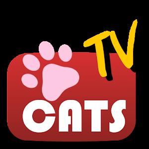 고양이 tv - 똥꼬발랄 고양이