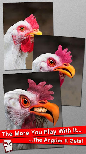 Angry Chicken Free