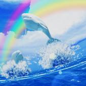 Beluga Ocean