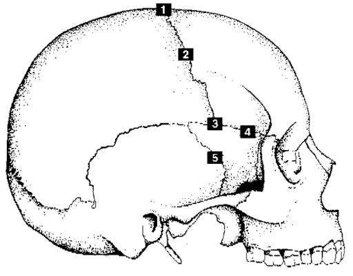 Osteon Diagram
