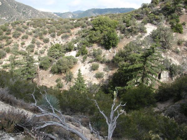 A few trees, short, bent, or broken.