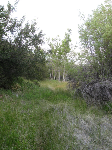 A bit of trail overgrown with grasses.