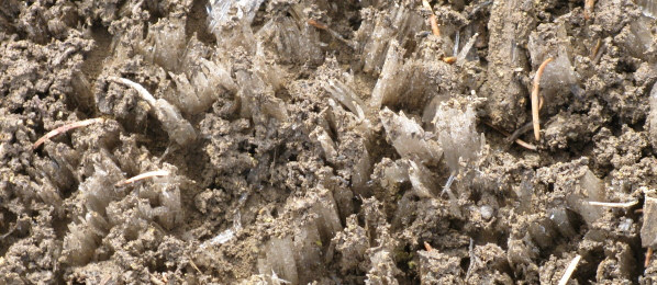 Ice forming from the mud on the ground.