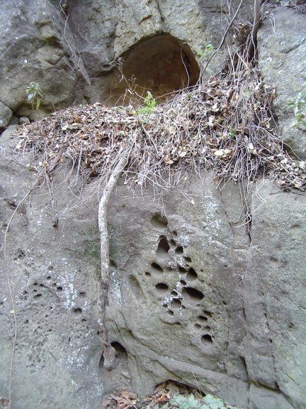 Water erosion of rocks so that many holes are left, topped by a small cave.
