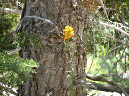 A sprig of yellow by a pine tree.