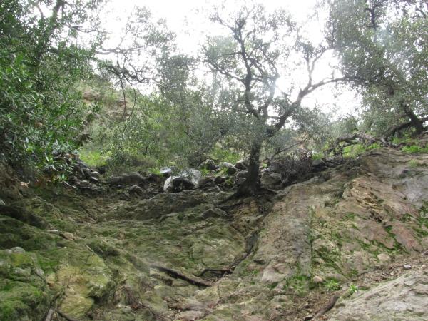 Oak on the cliffside.