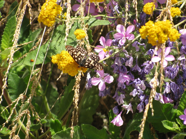 butterfly and ladybug on flowers
