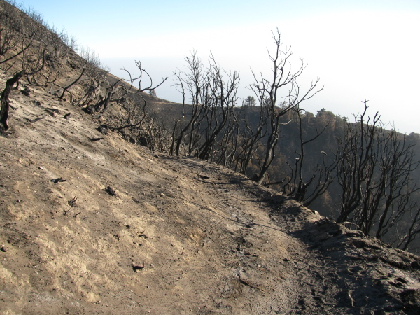a bit of trail through the burn