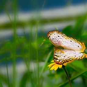 by Brianna Oliva - Animals Insects & Spiders ( butterfly, insects )