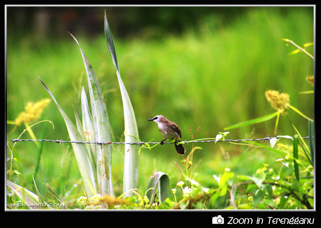 bird on a barb wire picture