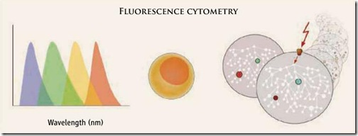 fluorescence-citometry