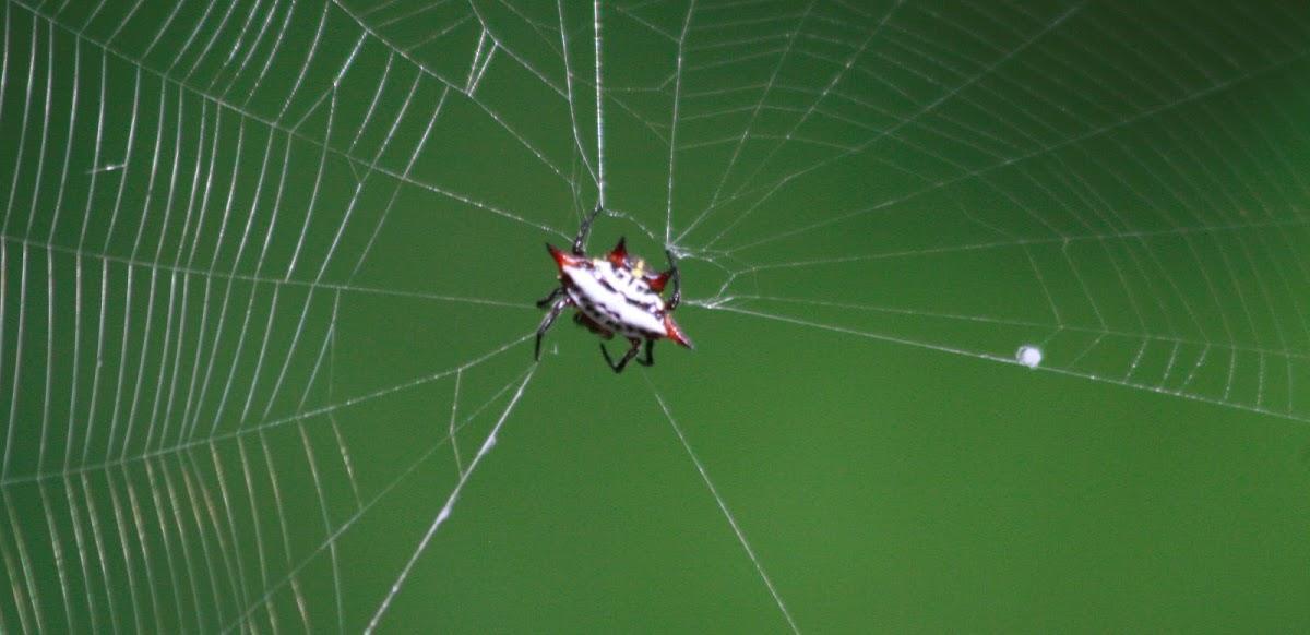 Kite spider