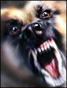 aggressive-dog.jpg