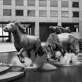 The mustangs of Las Colinas by Amitabh Mukherjee - Black & White Objects & Still Life ( exposure, dallas, texas, las colinas, horse, white, irving, travel, long, sculpture, mustangs, downtown, black,  )