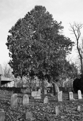 Quaker Graveyard