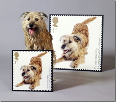 Battersea-Dogs-Home-Comme-003