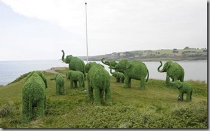 elephants-looking-to-sea-4471