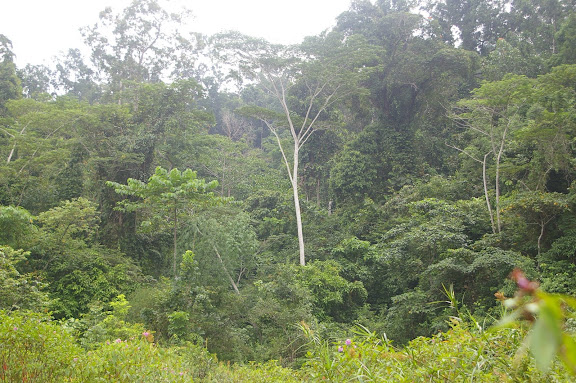 La forêt près de Port Barton, Palawan (Philippines, 12 août 2005). Photo : Jean-Marc Gayman