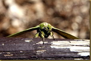 Giant green moth thing