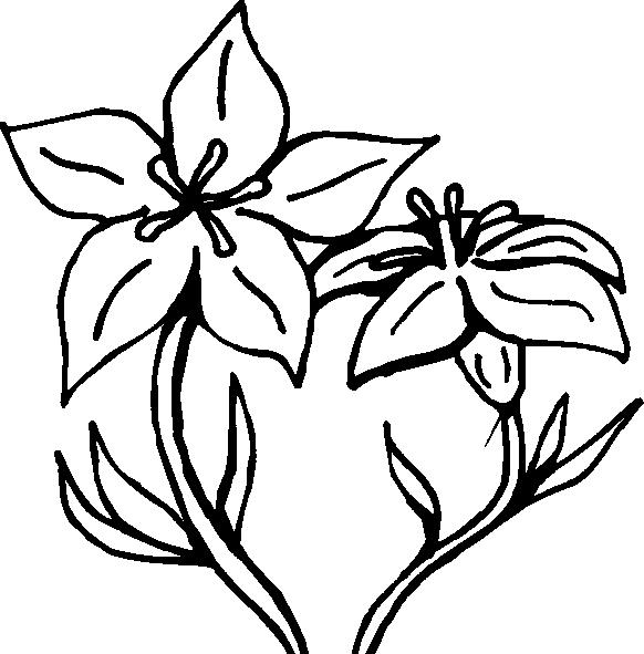 Orquidea nacional para colorear imagui - Coloriage fleur gentiane ...