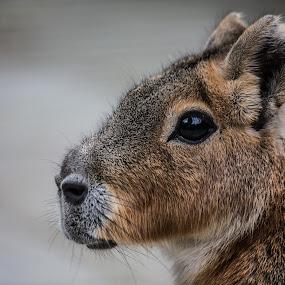Mammal by Patrick Quispel - Animals Other Mammals ( nature, mammal, outside, animal park, animal )