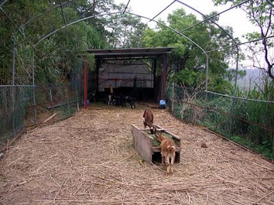 新竹關西飛鳳園農場 @定點露營