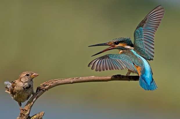 Wildlife-photography-of-birds5
