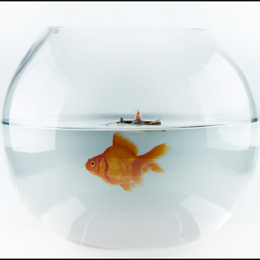 We're going to need a bigger boat! by Chris Sargent - Artistic Objects Other Objects ( scale, bowl, macro, little people, funny, preiser, goldfish )