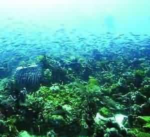 Taka Bonerate, Paradise Under The Sea